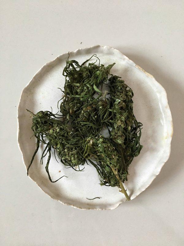 Wzmacniająca herbatka z kwiatów konopi 4