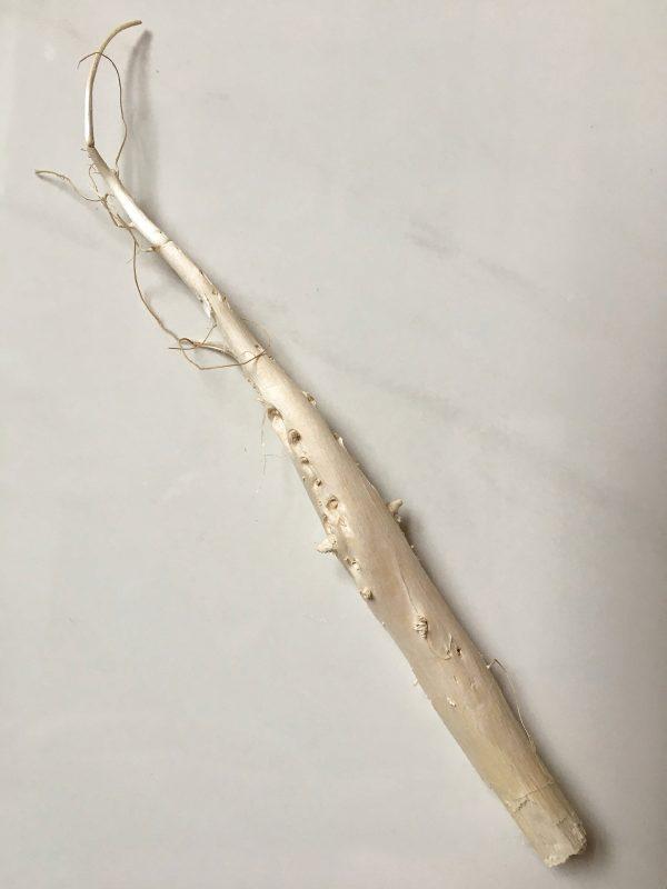 Ozdobny korzeń konopi bez korzeni bocznych 1
